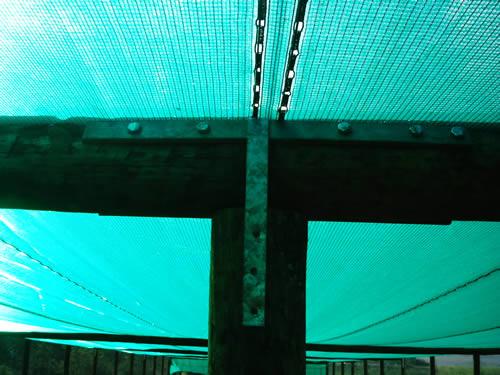 Ostend Net